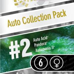 Auto Collection Pack #2 - 6 Graines