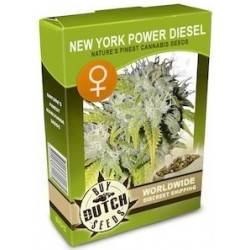 New York Power Diesel Feminisiert - 5 Graines